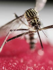 Eastern equine encephalitis is one of the most dangerous mosquito-borne diseases in the U.S. It can be fatal and often leaves survivors with brain damage.