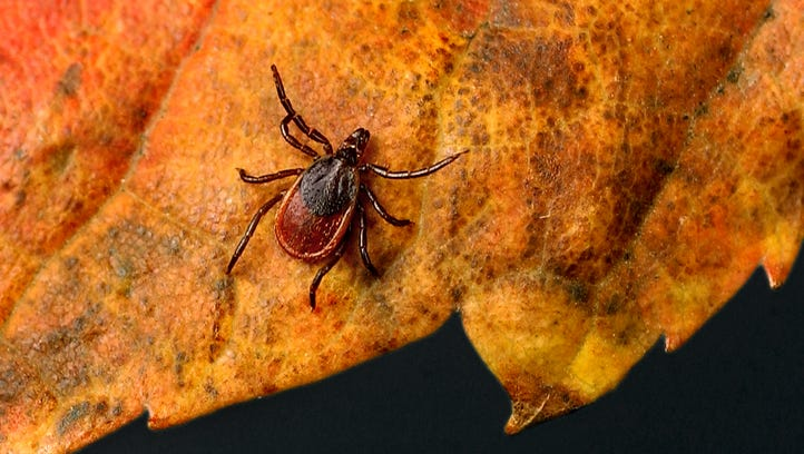 Suicide: Lyme disease's less understood outcome, a new study says