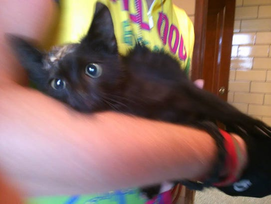 The little black kitten had road rash all over, plus