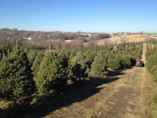 Dappen's Tree Farm is located at 20873 Greenview Road,