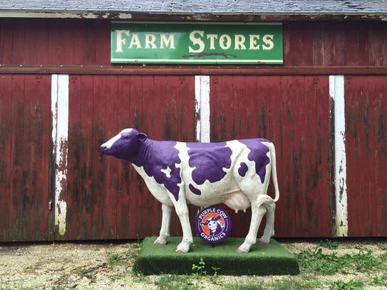 The Purple Cow at Serenity Farm in Oconomowoc
