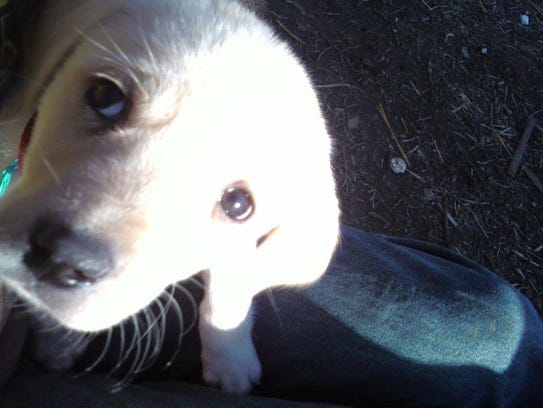 Janeen Rang's dog Jake, pictured here as a puppy, five