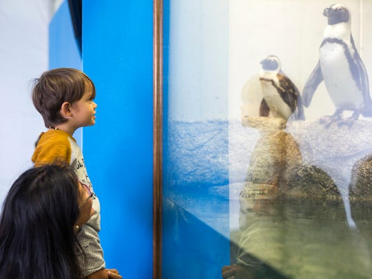 """Gloria Moorman and her son Tomas peer through the glass of the """"Penguins in Paradise"""" enclosure, a seasonal exhibit where four African penguins can be seen at the Naples Zoo until April 15, 2018."""