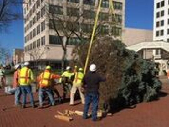 City workers hoist the Christmas tree into position on the downtown square.