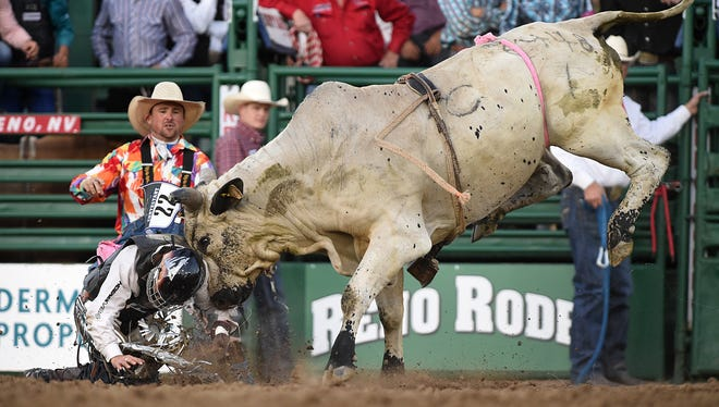 Tanner Learmont of Cleburne, Texas, gets a headbutt from Frankenstein (the bull he was riding) after getting thrown off in Thursday's Xtreme Bulls event at the Reno Rodeo on June 18, 2015.