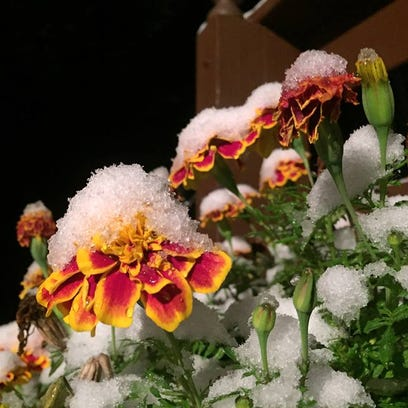 Snow covers area on Thursday.