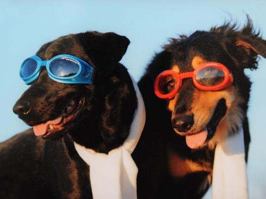 Some people enjoy dressing their pets up for pictures. If Gauntt boys Diesel, left, and Chili, are going to dress up, they're going to have to be cool.