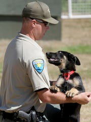 Jax is still a puppy, but he's being trained to work as a police dog by Kitsap County Sheriff's Deputy Joe Hedstrom.
