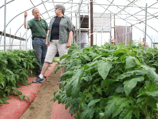 Rich Concklin and Mary Liz Mulligan stand in the tomato greenhouse at the Orchards of Concklin in Pomona May 21, 2014. Mulligan was visiting the farm checking on the crops that Rick Concklin supplies to the Bronxville Farmer's Market.