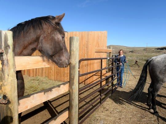 Randi Westlie trains horses at her home in Vaughn.