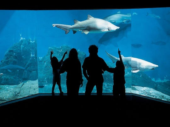 A family counts sharks in a tank at the Maritime Aquarium in Norwalk, Connecticut. The aquarium offers family sleepovers.