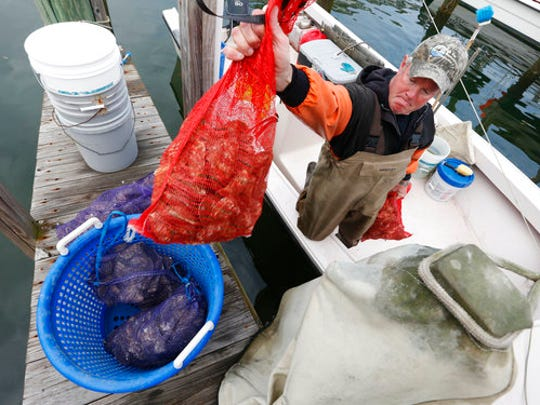 In this Thursday, Feb. 23, 2017 photo, oysterman, Chris Ludford, drops a bag of harvested oysters into a basket on the Lynnhaven River in Virginia Beach, Va. Over the past five years, oyster production has doubled on the East Coast, driven by new farming methods, cleaner water and Americans' growing taste for orders on the half shell. The resurgence has led to unprecedented resistance from coastal residents in Virginia and fueled a debate over access to public waterways.