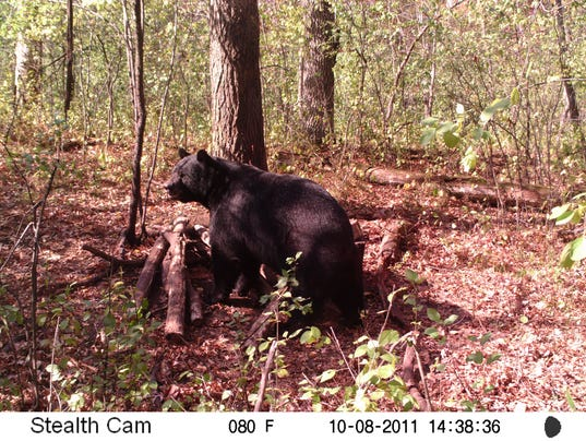 636354786626149495-Bear-trail-cam-photo-by-Lon-Feia-of-Hudson.jpg