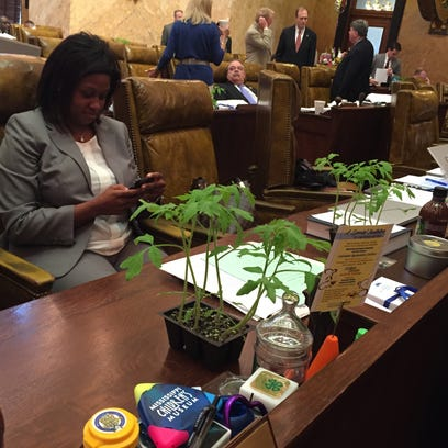 Tomato plants from MSU adorn desks of Mississippi lawmakers,