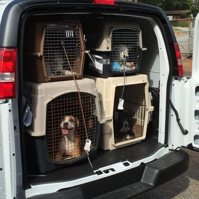 Dogs that have been displaced by floods are set to