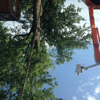 Crews trim damaged and  fallen trees and limbs on South