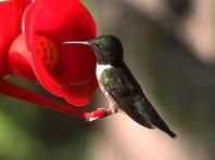 Birding Festival lands at Audubon Park Saturday; activities run all day