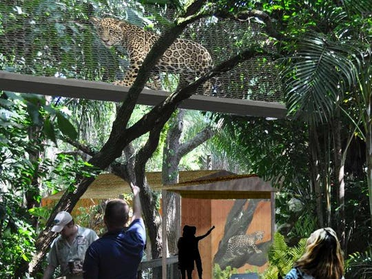 The Brevard Zoo's new jaguar habitat will allow zoo patrons to view the jaguars moving from one habitat to another through clear tunnels while they are overhead of the spectators.