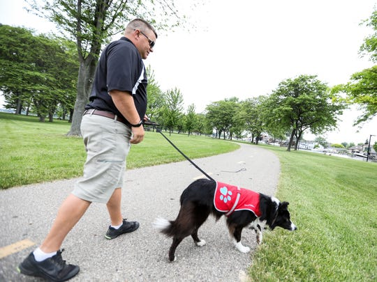 Chris Compton, 46, of Holly, Mich., works with his  3-year-old border collie,  Ellee, clearing goose along the lake edge at Lake St. Clair Metropark in Harrison Twp, Mich., photographed on Saturday, June 9, 2018. The park is trying to reduce E. coli levels from goose feces.