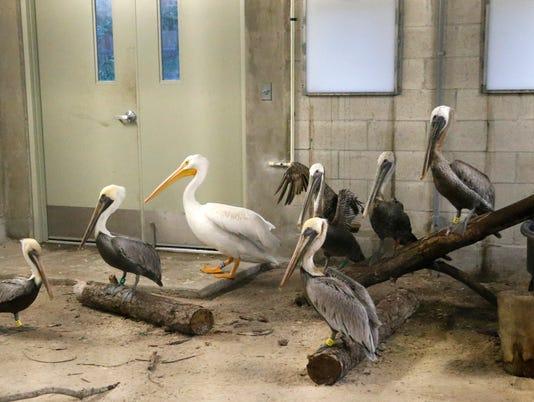 AP HURRICANE IRMA ANIMALS A WEA USA FL