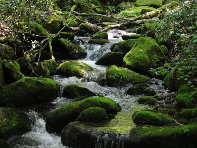 The Chestnut Branch creek runs near the Big Creek ranger station, at the end of a 4 mile hike combining the Appalachian Trail and Chestnut Branch trail on the eastern border of the Smoky Mountains on Tuesday, May 24, 2016.