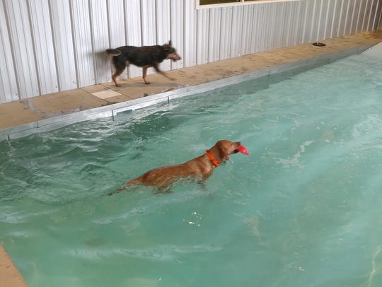 The Pet Station Country Club indoor pet pool.