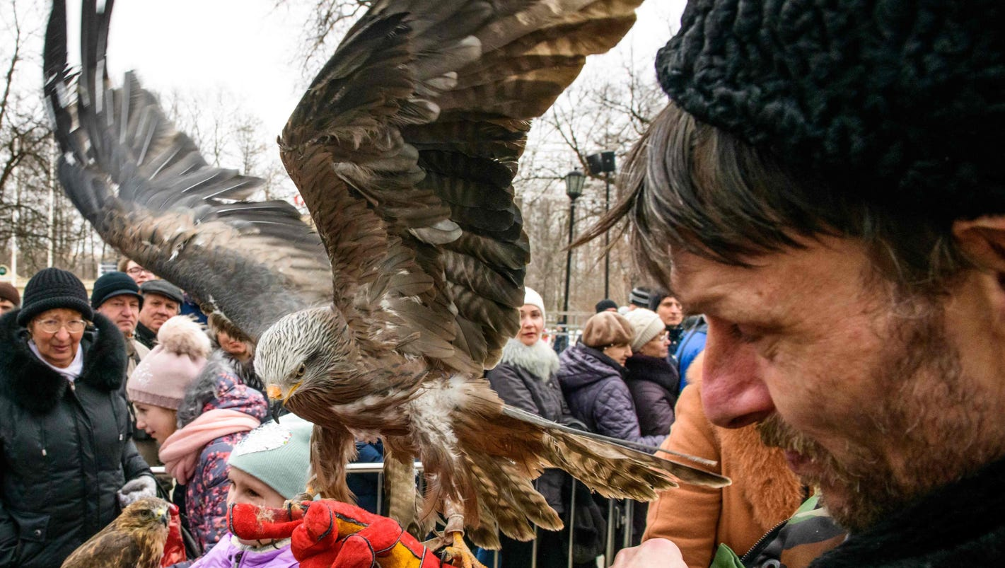 Birds of prey on display in Moscow