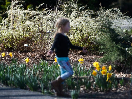 Abby Patrick, 4, runs around at University of Tennessee's gardens on Friday, Feb. 17, 2016.