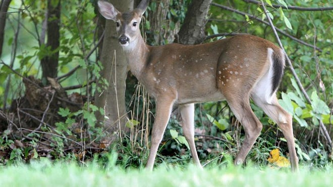 DEC Commissioner Basil Seggos said that the sale of hunting licenses on Day 1 this year was three times the number sold on Day 1 of 2019..