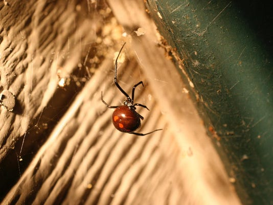 Gardening Beneficial Spiders