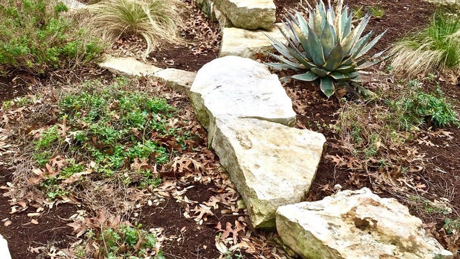 A little leaf litter left in landscape beds provides habitat, helping beneficial insects like ladybugs and bees survive winter.
