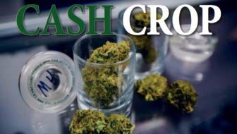 Cash Crop Logo