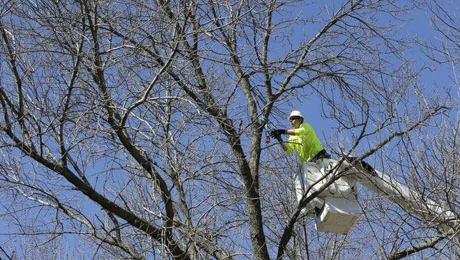 Bo Boddicker of Family Tree Care cuts down an ash tree March 9 in Des Moines.