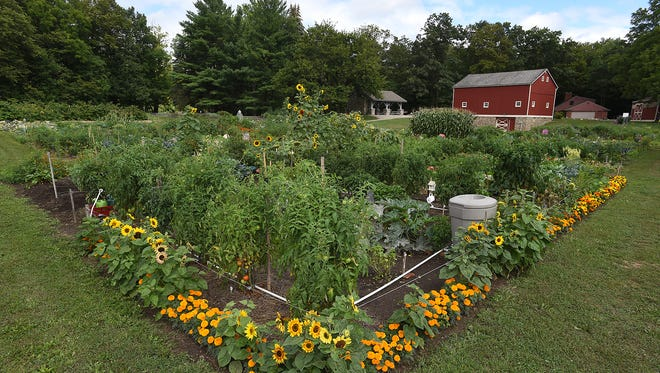 A community garden at the Thayer's Corner Nature Area last month. Many of those who have planted vegetables and flowers are reaping their harvests at this time at the Northville Township nature area, which has 100 community garden plots and a common garden.