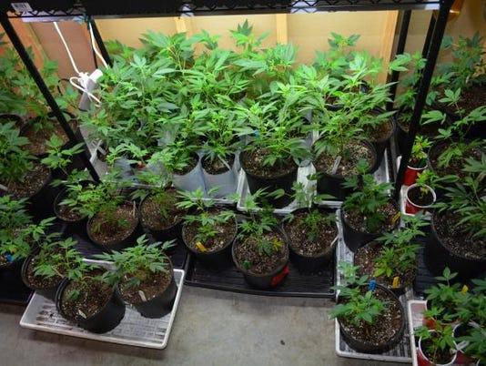636078185749365164-marijuana.jpg