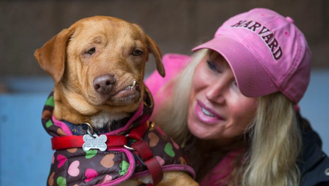 In this March 8, 2017 photo, Picasso the dog, who was rescued from a California kill shelter by the Eugene-based Loveable Dog Rescue, is seen with Liesl Wilhardt, Luvable Dog Rescue founder and executive director in Eugene, Ore. With his famous misaligned snout and unique toothy grin, Picasso was honored Wednesday, March 7, 2018, in Portland with an Oregon Humane Society Diamond Collar Hero Award.