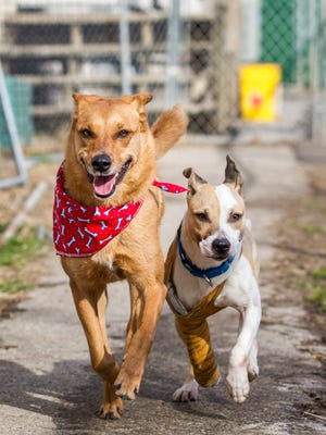 Maggie (left) and Quarry in the exercise yard behind Faithful Friends animal shelter.