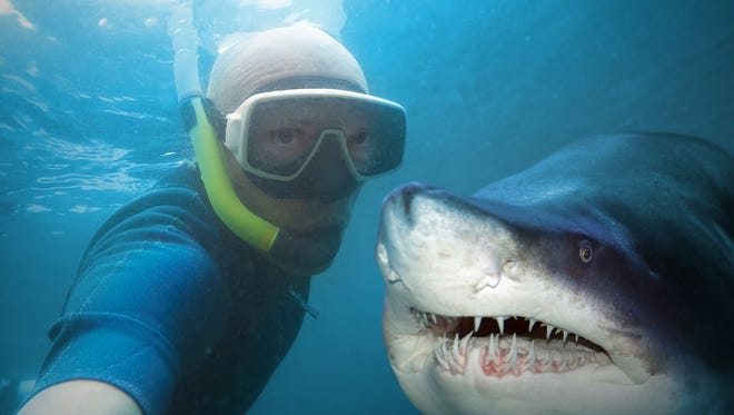 Stock image of diver and shark.
