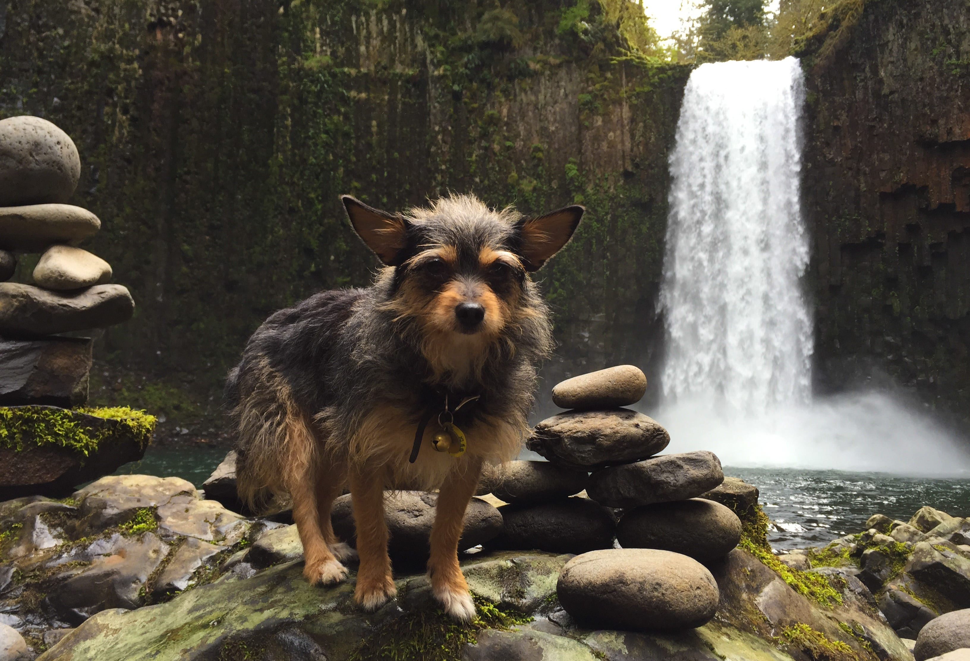 small dog breeds that like water