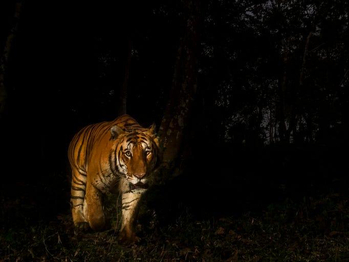 Located in India's far eastern province, Assam, Kaziranga