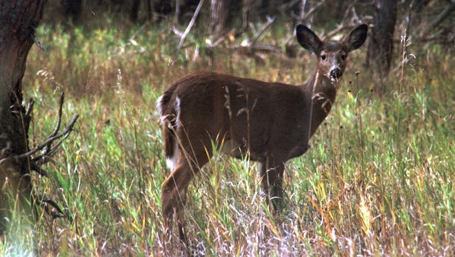 Antlerless deer kills have been banned in 13 Wisconsin counties in the hopes of increasing the size of the herd.