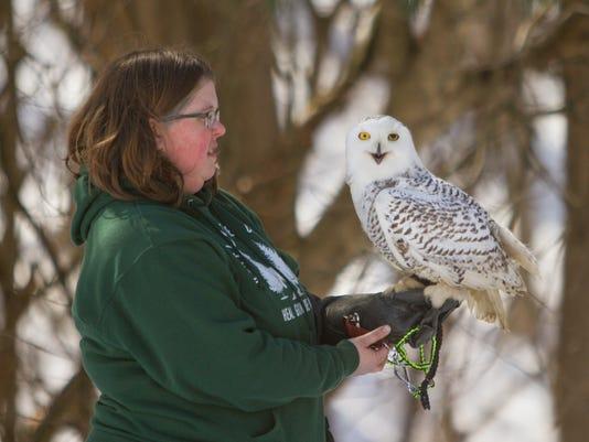 636570483143772363-Snowy-Owls-02.jpg