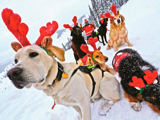 """In this December 2014 photo, ski patrol dogs of Crested Butte Mountain Resort wear antlers, with ski patroller Chris """"Buck"""" Myall dressed as Santa, in Crested Butte, Colo. The dogs search for missing or buried skiers. Even if no one is buried in an avalanche, a dog team will go and get started on a search since time is so crucial."""