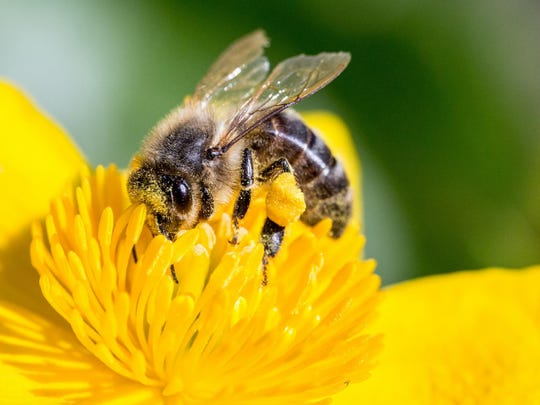 A Celebration of Pollinators, June 17