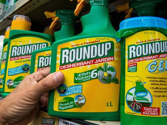 A bottle of Monsanto's 'Roundup' pesticide in a gardening