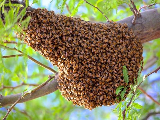 az365 bee bees swarm Dean