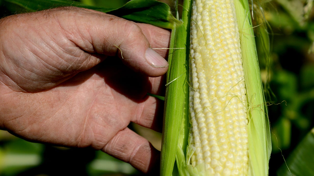 How to cook sweet corn, according to Henry Pray of Pray Farms.
