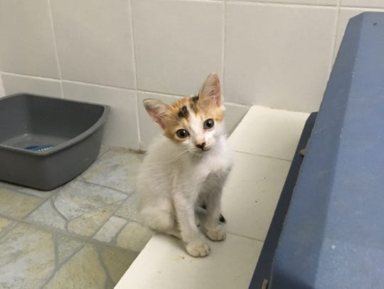 She turned out cute — but as the runt of her litter,
