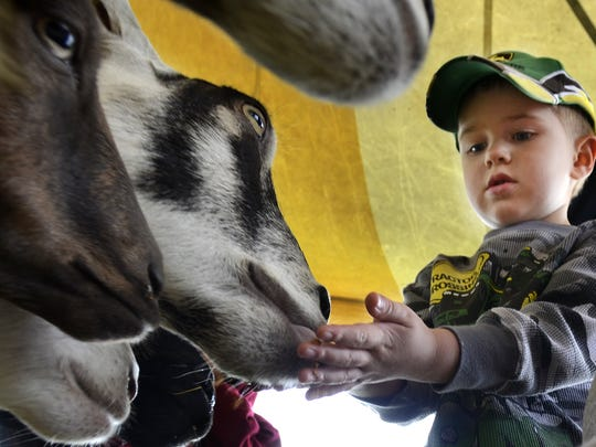 Noah Chervenka of Green Bay, 3, feeds the various animals at Happy Acres' petting zoo tent at Riverfest. Young and old from near and far come together for a car show, tractor pull, fair food, amusement rides, and much more on Saturday, July 27, 2013, during the annual Riverfest celebration at Mishicot VillagePark in Mishicot. Matthew Apgar/HTR Media