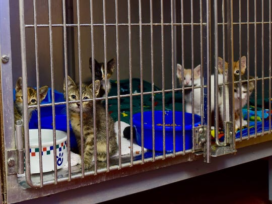 In addition to dogs, the Dodge County Humane Society houses about 70 cats and kittens, which are also available for adoption.